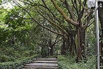 林间小道旁的成排树木