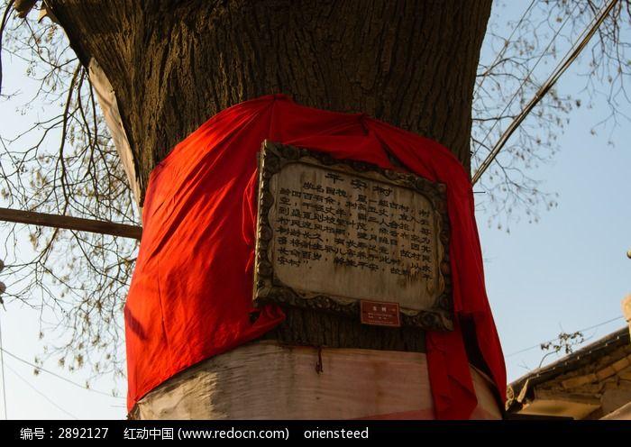 柳沟村的平安树四百年历史的老槐树图片,高清大图
