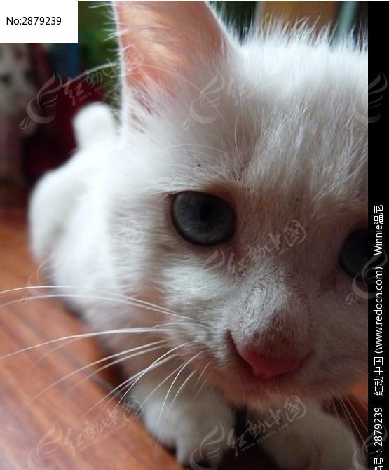 一半猫脸的头像