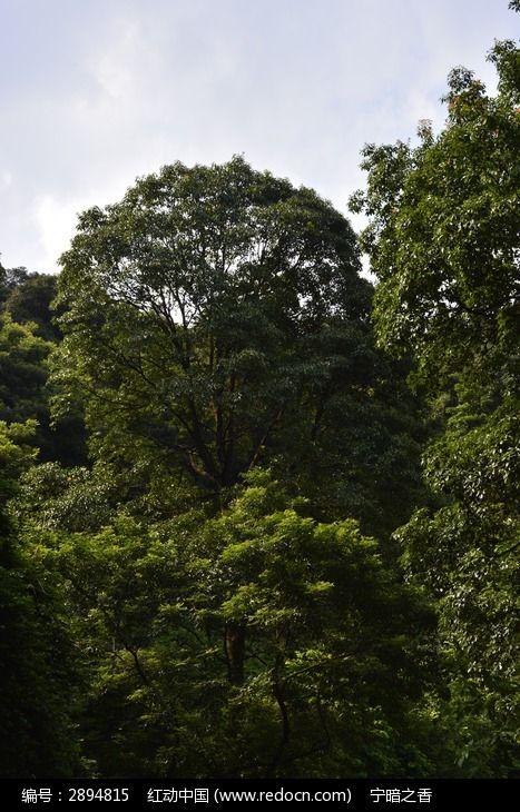 茂盛的树木图片,高清大图
