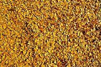 密集的银杏落叶底纹素材