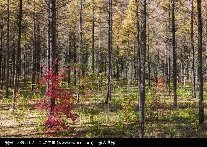 原创摄影图 动物植物 树木枝叶 树林