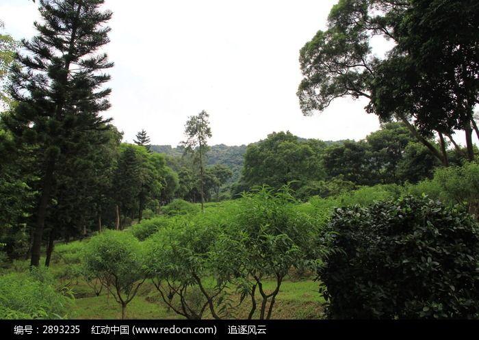 原创摄影图 自然风景 森林树林 > 桃花树边的树林图片  素材编号