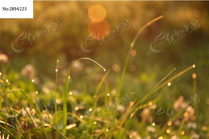 原创摄影图 动物植物 花卉花草 小草和露珠  请您分享: 红动网提供