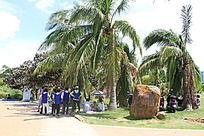 椰树下乘凉的志愿者