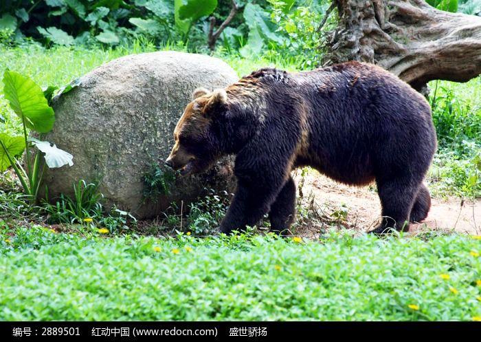 原创摄影图 动物植物 陆地动物 野外黑熊