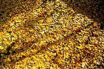 银杏树叶底纹素材