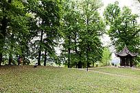 翠绿的一片林子