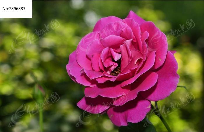 原创摄影图 动物植物 花卉花草 高清花朵