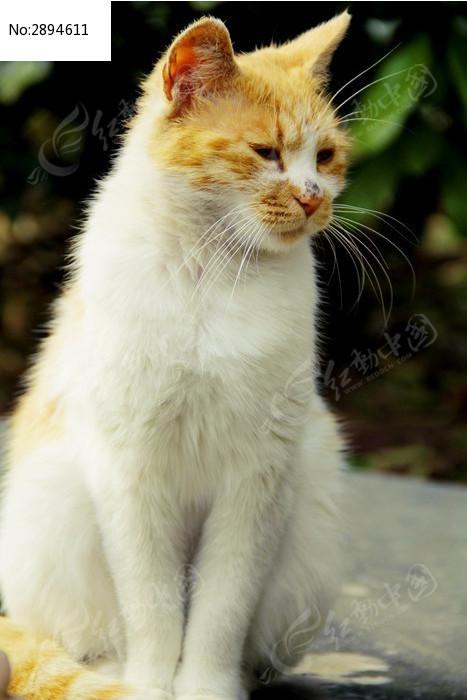 孤独站立的小猫