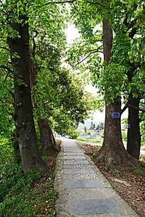 古红枫林与石板路