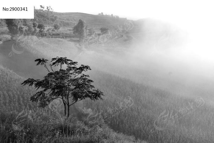 黑白色树和雾图片,高清大图