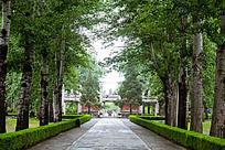 明十三陵总神道上两派整齐的树木