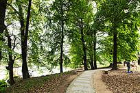 树林中的一条石板小道