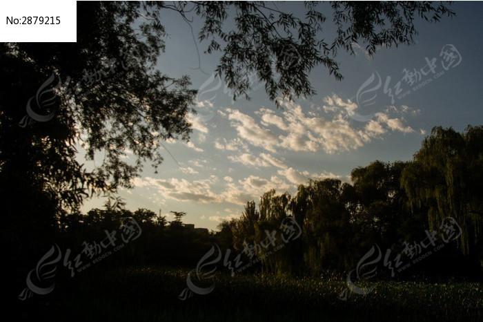 日落 晚霞 火烧云 云层 天空 云彩 树木 剪影