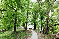 一条石板路向树林中延伸