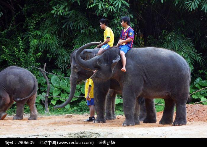 马戏团大象表演