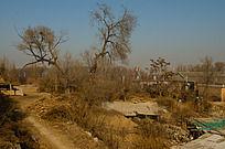 荒凉的冬季北方山村的黄土枯树