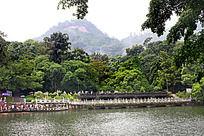 湖边丛林风景