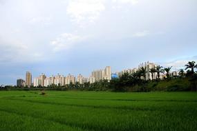 田园景观与远处的建筑