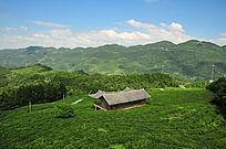 茶园环抱的小屋