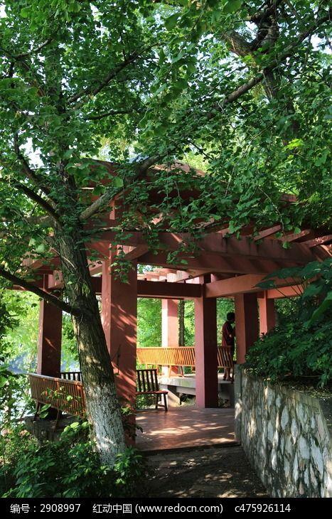 桂湖银杏树下的凉亭图片,高清大图_园林景观素材