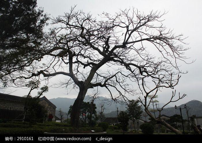 深圳大鹏所城许愿树图片