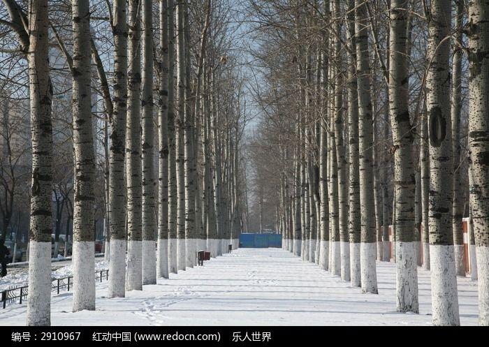下雪后的城市树林图片