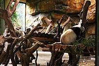 熊猫动物园