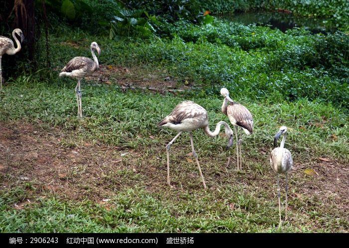 原创摄影图 动物植物 水中动物 野外灰鹤