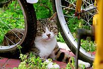 车轮下的小猫