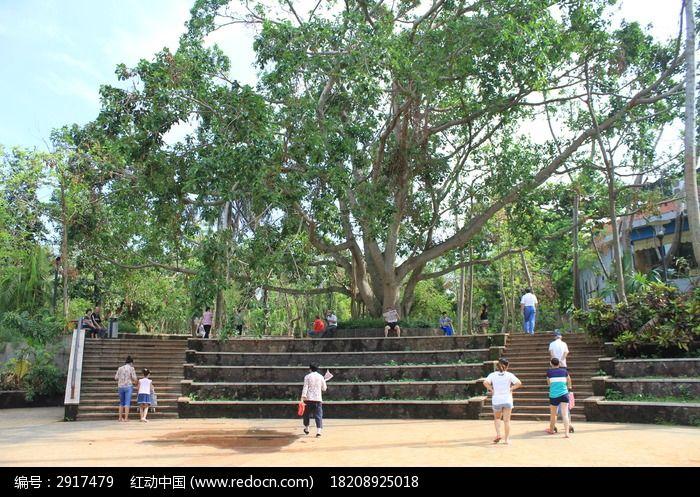 原创摄影图 动物植物 树木枝叶 公园大树  请您分享: 红动网提供树木