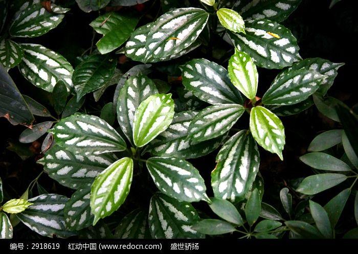 原创摄影图 动物植物 树木枝叶 花纹叶子  请您分享: 红动网提供树木