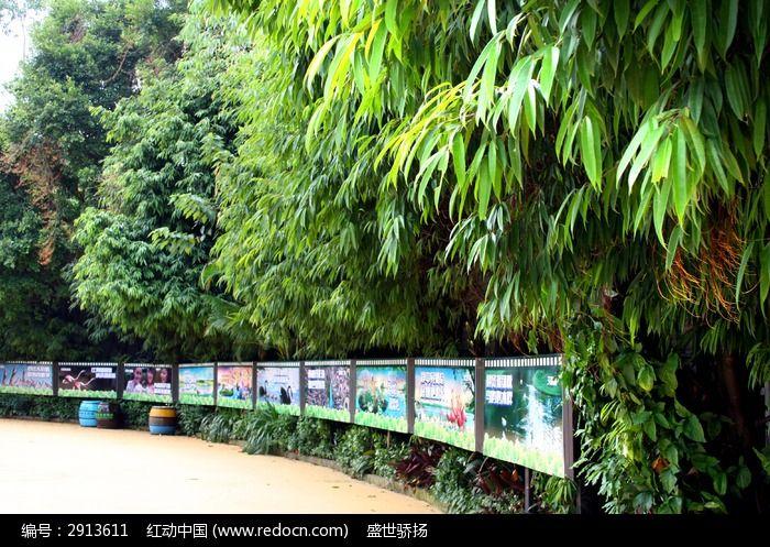 园林风景竹子图片,高清大图