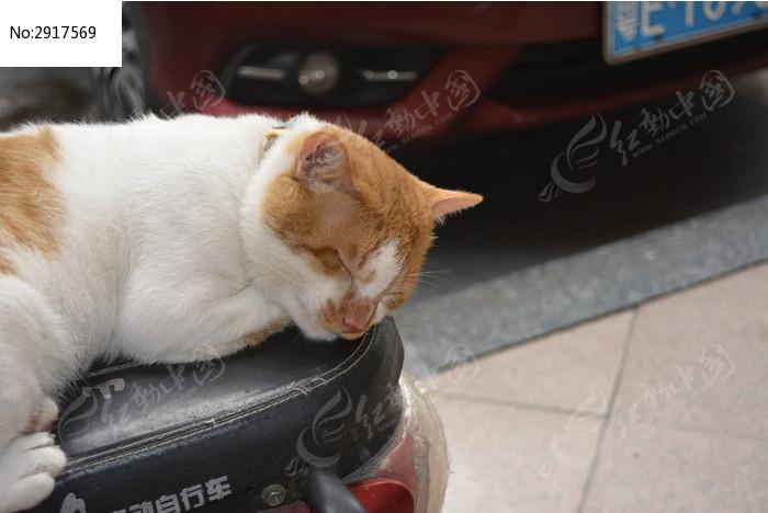 在摩托车上睡觉的猫咪图片
