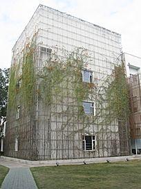 植物装饰外墙