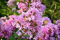 春天花朵奥林匹克大自然唯美
