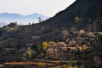 春天里的村居