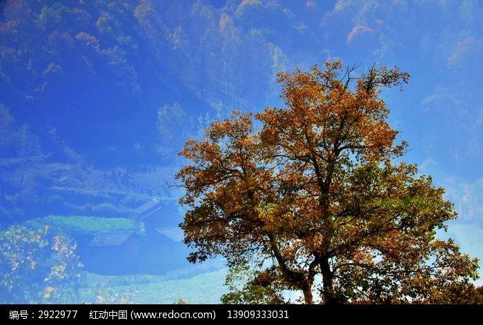 大树叶子黄了图片_动物植物图片