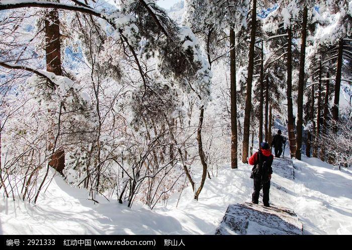 摄影 雪景采风图片