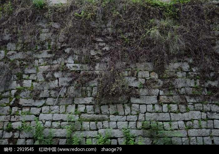 石头墙与植物图片素材下载(编号:2919545)