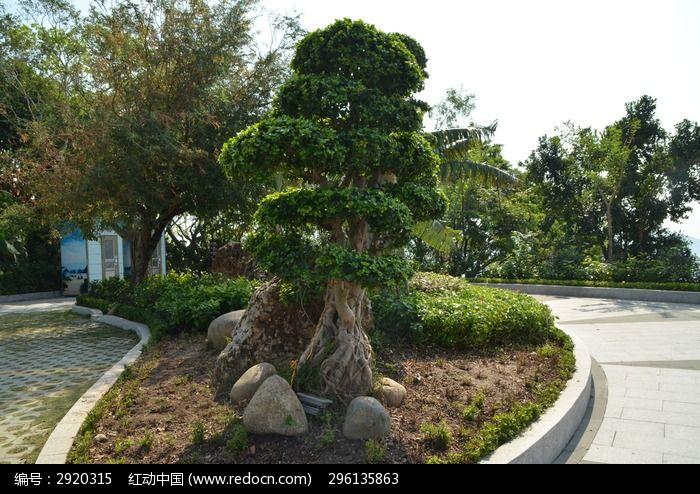 造型独特的树图片,高清大图_树木枝叶素材