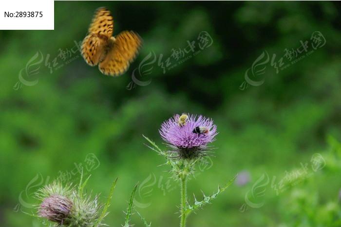 蝴蝶蜜蜂和花朵小ck兔子包蓝色