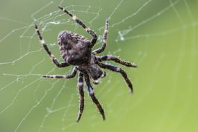 浅绿色背景下的蜘蛛
