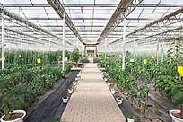 高科技大棚种植蔬菜