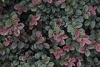 红色和绿色叶子背景图