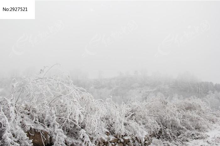 结满冰花的野草