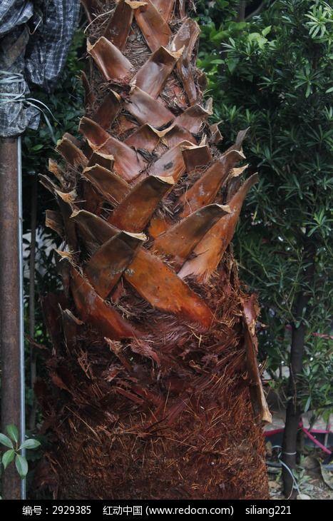 棕榈树树皮图片