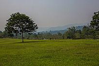 草原上生长的一棵树