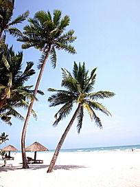 海南椰树风景图片_海南椰树字体设计素材古隶书设计风景在线图片